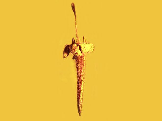 Фосилизовани цвијет стар 15 милиона година пронађен у ћилибару (Фото: Oregon State University / Flickr )