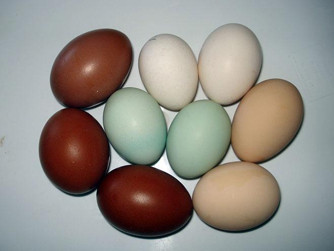 Коке носе обојена јаја (ФОТО:СРНА)