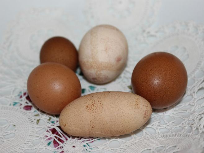 Необична јаја које је снио пијетао (Фото: Срна)