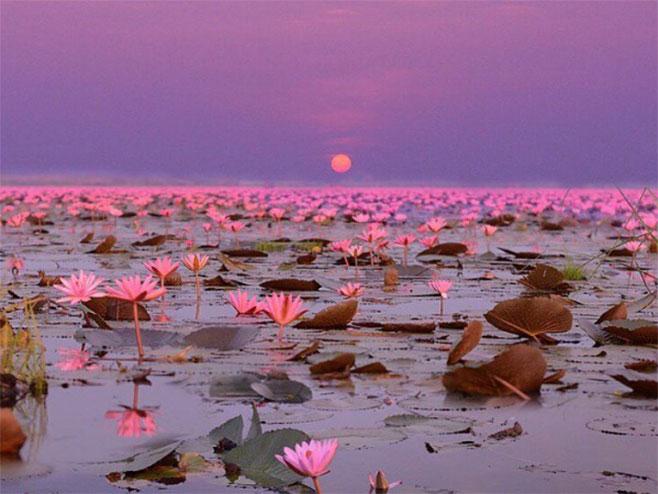 Јezero crvenih lotosa (foto:instagram.com)