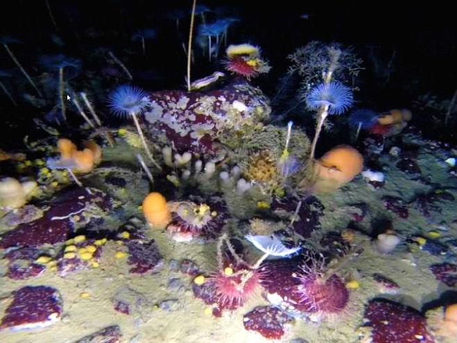 Шарени свијет испод леда Антарктика - Фото: Screenshot/YouTube