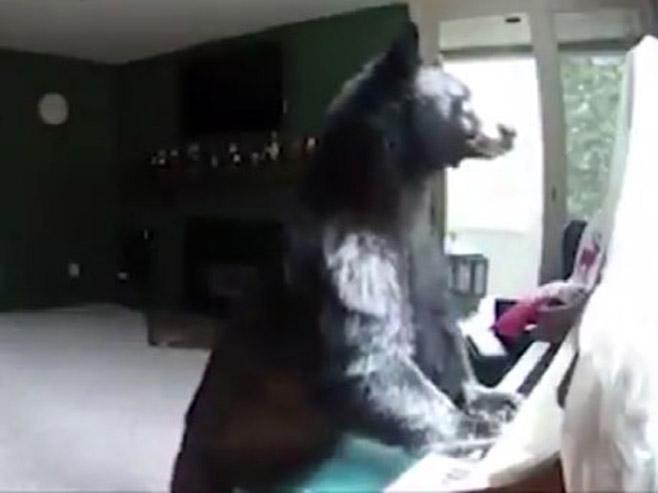 Медвјед који свира клавир - Фото: Screenshot/YouTube