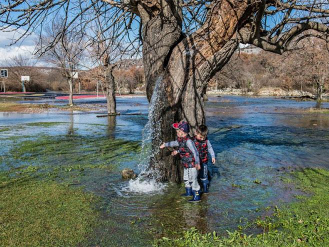 Voda iz stabla (Foto:nezavisne.com)