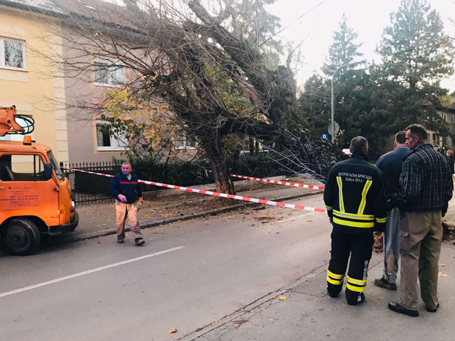 Srušilo se drvo u Banjaluci (Foto: RTRS9
