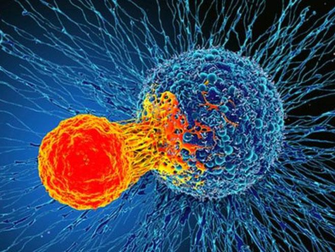 T ćelija napada ćeliju raka (foto: bbc.com & Science Photo Library)