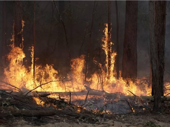 Požar (foto: AP/TASS/Rick Rycroft)