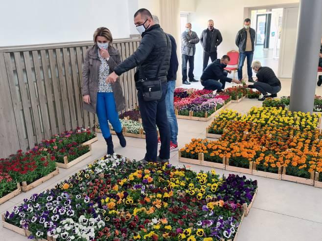 Добој: Подјела садница цвијећа (Фото: Срна)
